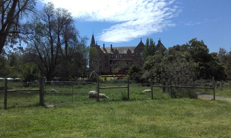 Abbotsford Covent et ses moutons